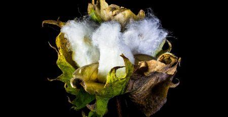 cotton footprint